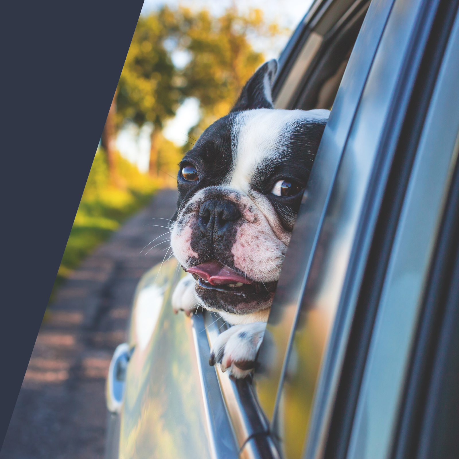 car insurance in spain, costa blanca dog hanging out window